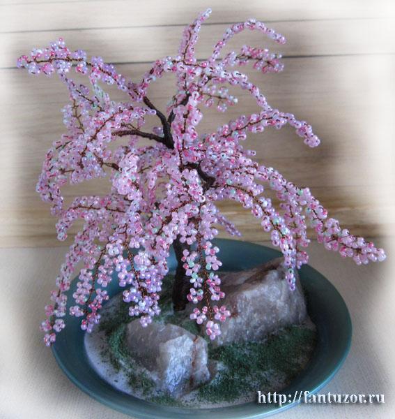 нее персиковое дерево,